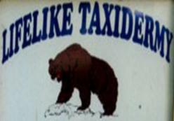 LifeLike Taxidermy